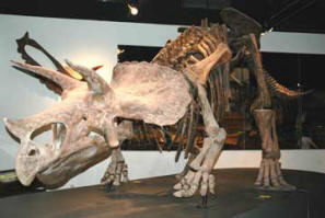 Triceratops-DHA